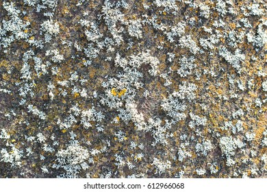 Background texture with moss and irregularities