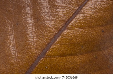 Background texture of an old autumn leaf close up