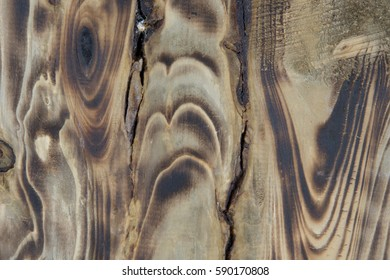 Background texture of old wood closeup