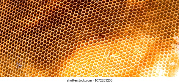Background texture and pattern of a section of wax honeycomb from a bee hive filled with golden honey .