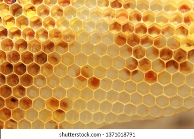 Background texture and pattern of a section of wax honeycomb from a bee hive