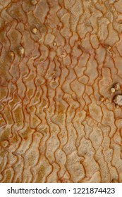 background or texture picture taken of  travertine terraces  (badab-e sourt)
