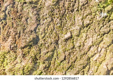Background and texture of rough tree bark surface