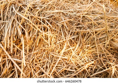 background texture Straw litter and animal feed Straw thatch bed haystack