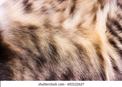 Background texture striped cat fur, wool close up