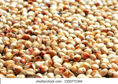 Background and texture of sugar sorghum. Side view. High-quality seeds of sugar sorghum in the form of texture. Can be used by seed producers to create seed packages in the background.