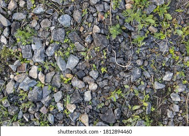 background and texture of the surface of the ground. Forest trodden path