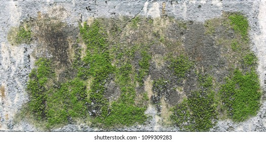 background texture: the surface of old concrete slab covered with moss or algae