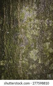 background texture of tree bark closeup