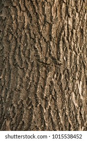 Background texture of tree trunk