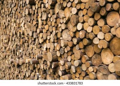 background texture wooden trunk