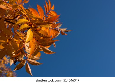 Background texture of yellow autumn leaf background