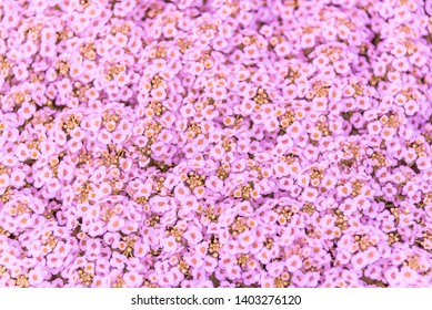 Background of Tiny Flowers in Spring