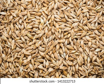 Background Top view of barley grains