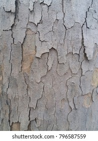 Background. Tree bark. Texture