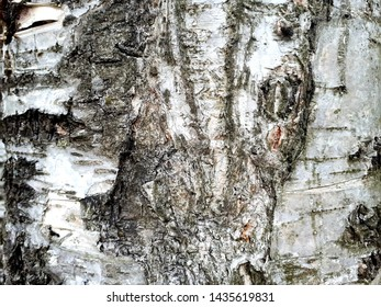 Background of tree bark. The tree trunk is depicted. Relief texture of the brown bark of the tree. Extended panorama of oak bark for decorations DIY creativity and creative ideas.