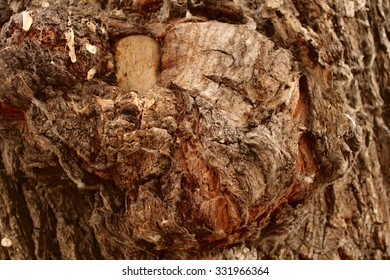 background tree texture structure backdrop