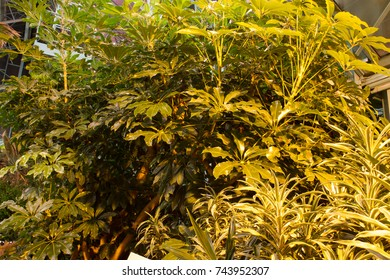 Background of tropical plant leaves