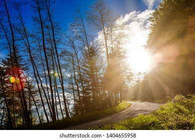 In the background uphill road, among trees and sunbeams that create fler