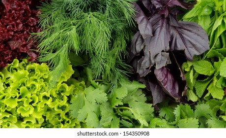 Background of Various Fresh Greens with Lettuce, Basil, Mint, Dill and Parsley closeup