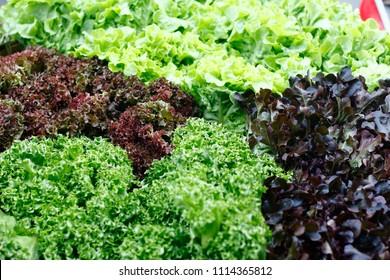 background of vegetables for cooking salad sold in market