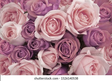 Background of vintage pink and lilac roses