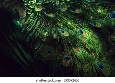 Background, wallpaper, texture. Part of beautiful peacock tail in dark