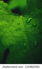 Background of water drops on grape leaf