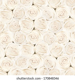 Background of white  bright beautiful roses