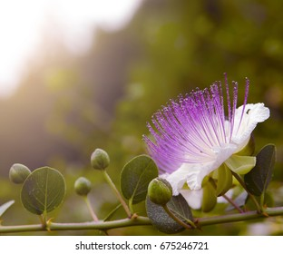 Background with white capers
