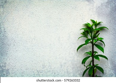 Background white cement wall with green plant. Top view with copy space for your text