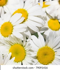 background from white flowers daisywheels
