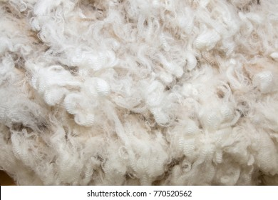 Background of white merino wool
