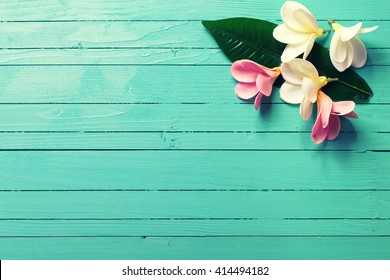 Background with white and pink tropical plumeria flowers on turquoise wooden background. Selective focus. Place for text.