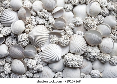 Background of white seashells and corals, collected at Norwegian coast
