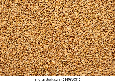 background from whole grains. groats texture