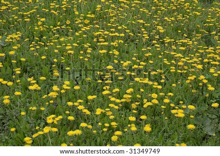 Background Wild Yellow Flowers Grass Stock Photo Edit Now 31349749