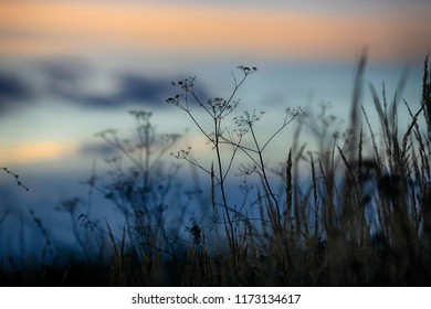 Background of wildflowers in the evening at sunset