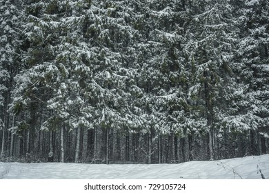 background in winter forest