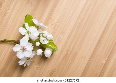 Background wood spring flower