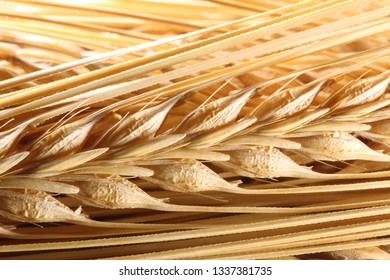 Background of yellow barley ears, macro shot
