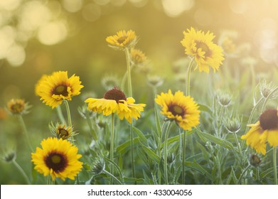 background with a yellow flower