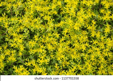 Background with the yellow flowers.
