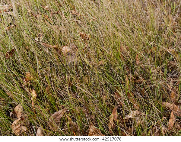 Background from yellow leaves and length of a green grass