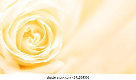 Background with yellow rose