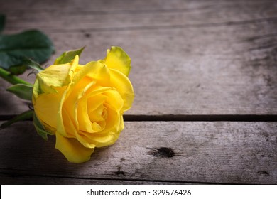 Background with yellow rose on wooden table. Selective focus. Place for text.