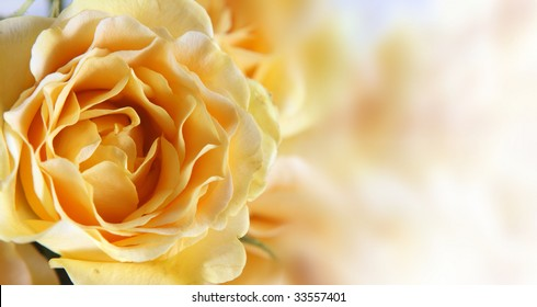Background with a yellow rose and a place for the text.