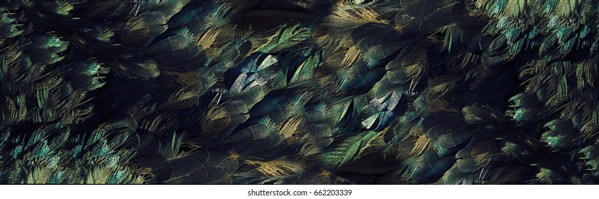Background,Feathers, textural background .natural black feather with beautiful healthy shine. Natual background suitable for decoration of sites, banners