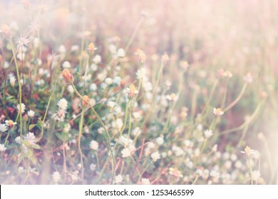 Backgrounds, Blur grassy flowers and soft sunlight.