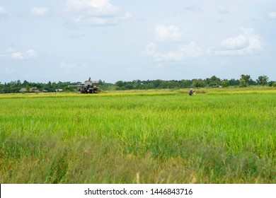 Backgrounds Farmers and harvesters in  Golden rice fields in Thailand